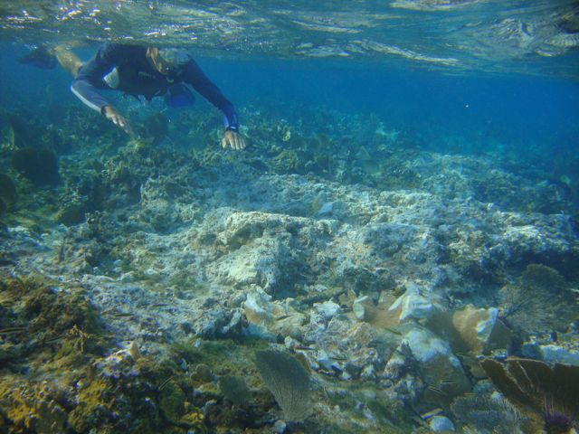 A large elkhorn coral colony severely damaged.