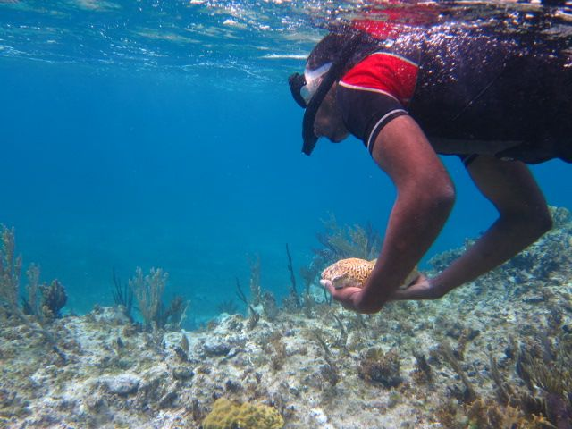 Howard swims a small brain coral to safety.