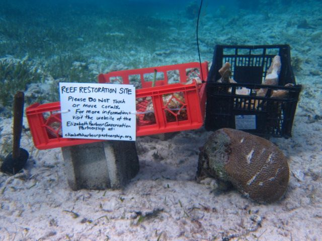 Reef Restoration Site: Please do not touch or move corals.