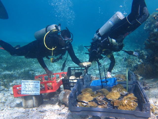 Temporary hospital beds for the injured corals.