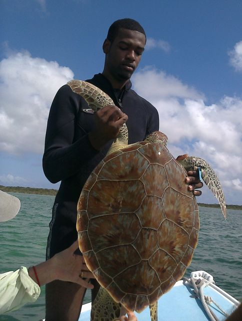 Howard holds a tagged green turtle. He joined Family Island Research and Education to tag turtle in Barra Terre creeks.