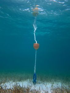 The new dinghy mooring system underwater.