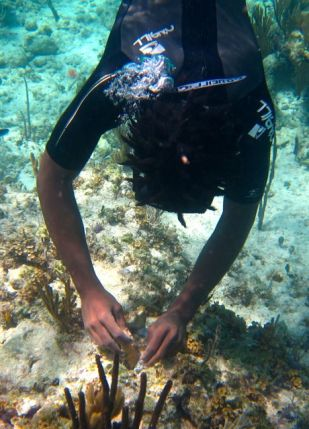 BJ Charlton carefully cements a coral fragment to the reef.