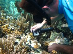 Dr. Craig Dahlgren photographs a newly placed coral.